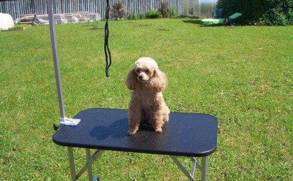 Стол для стрижки собак, фото 1