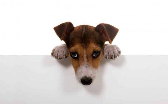 Диета при панкреатите у собак