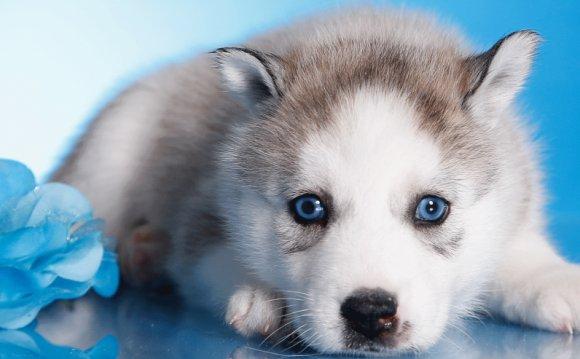 Как ухаживать за собакой