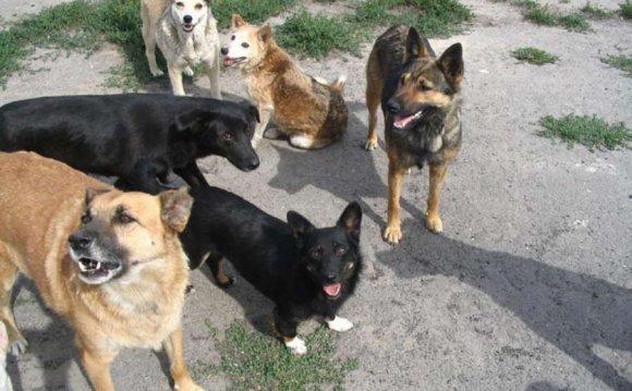 Ловить бродячих собак теперь