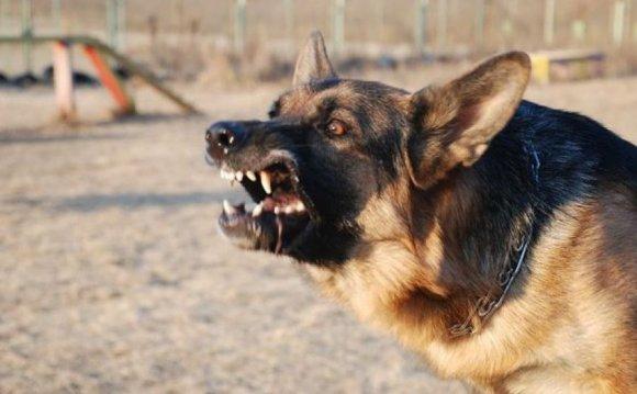 компенсации за укус собаки