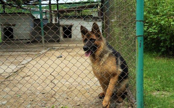 Собаки в племенном питомнике