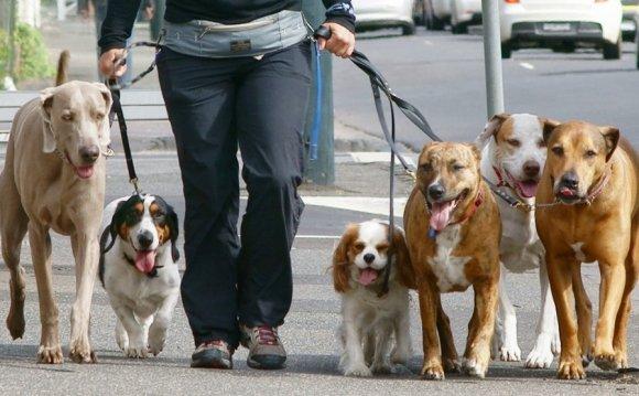 Выгул собак в городе Правила