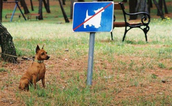 О Правилах содержания собак и