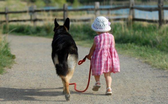 выгуливают собак