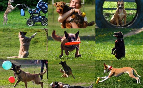 Как обучается собака