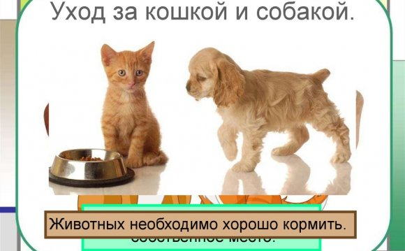 Содержание кошек и собак в