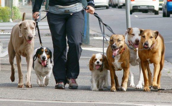Стоимость выгула собак в Киеве