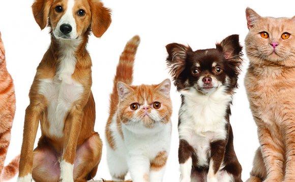 Стрижка собак и кошек