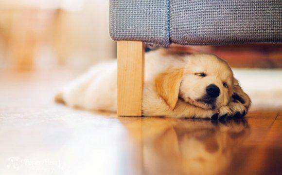 Уход за собакой в квартире