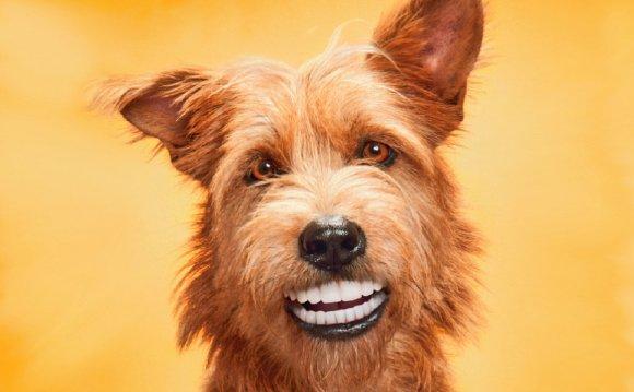 Уход за зубами у собаки - Вест