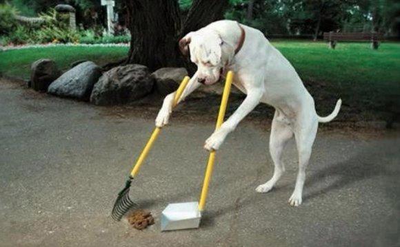 по содержанию собак