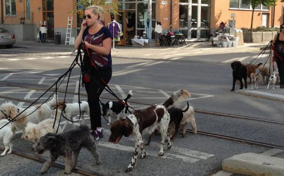 правила содержания собак